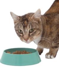 Alimentar ao gato