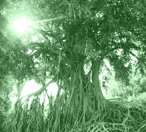 A máxia das árbores
